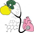 melimilo-quince_health
